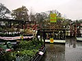 Plants for sale - geograph.org.uk - 1087417.jpg