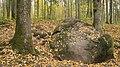 Pokaiņu mežs Лес Покайню 2015 - panoramio (9).jpg