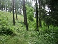 Poland. Gmina Jedwabno. Forests 002.JPG