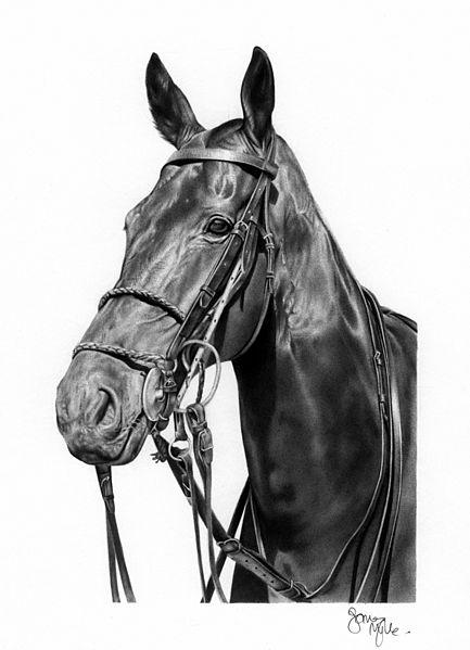 Polo pony