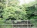 Pont Tal-y-bont bridge - geograph.org.uk - 545518.jpg