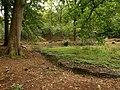 Pool in Coverham Inclosure - geograph.org.uk - 964388.jpg