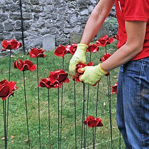 Blood Swept Lands and Seas of Red - Volunteer planting poppies