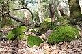 Population de mousse verte sur pierre.JPG