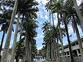 Praça das Palmeiras.JPG
