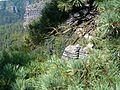 Pravcicka brana - 26.JPG