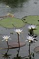 Pretoria Botanical Gardens-043.jpg
