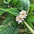 Pretty Little Wild Flowers.jpg