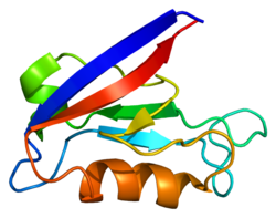 Protein DLG1 PDB 1iu0.png