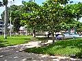 Puerto Maldonado - panoramio.jpg