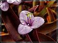 Purple Heart - Flickr - pinemikey.jpg