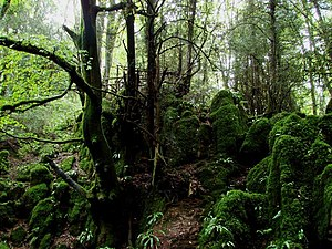 Flesh and Stone - The scenes in the forest were filmed at Puzzlewood in the Forest of Dean.
