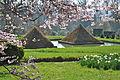 Pyramidons du bosquet de bambous.JPG