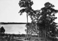Queensland State Archives 302 Looking from Boreen Point across Lake Cootharaba c 1931.png