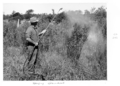 Queensland State Archives 4494 Groundsel poison spraying c 1950.png