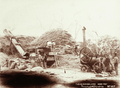 Queensland State Archives 5184 Threshing at Wallumbilla 1899.png