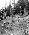 Qui Si Sana Sanatorium and Biological Institution showing model chalet known as Dove Cot on cedar stump, 1913 (WASTATE 1572).jpeg
