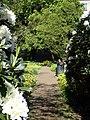 Rådhusparken (rhododendron) 01.jpg