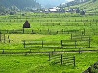 RO SV Panaci meadow.jpg
