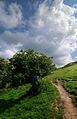 Rag tree, Loughcrew.jpg