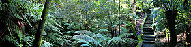 Rainforest walk - National Botanical Gardens Canberra