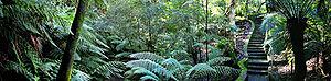Australian National Botanic Gardens - Image: Rainforest walk national botanical gardens