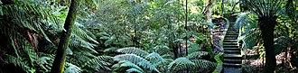 Australian National Botanic Gardens - Image: Rainforest walk national botanical gardens