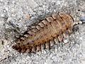 Ramnicu Valcea - insect.jpg