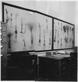 Range Plant Exhibit in Forestry Office. - NARA - 295192.tif