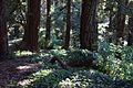 Redwood Memorial Grove 26 2017-06-12.jpg