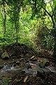 Regenwald Ghana 2013.jpg