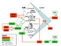 Regulación ciclo celular.png