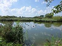 Reinheimer Teich 03.09.2011 (22).jpg