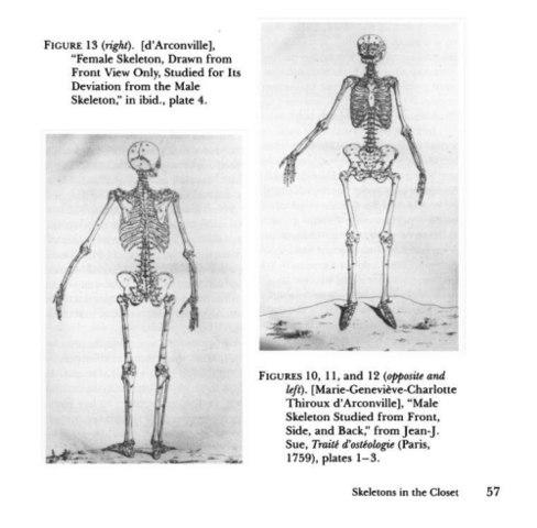 Гравюры, отражающие различие пропорций женского и мужского скелетов