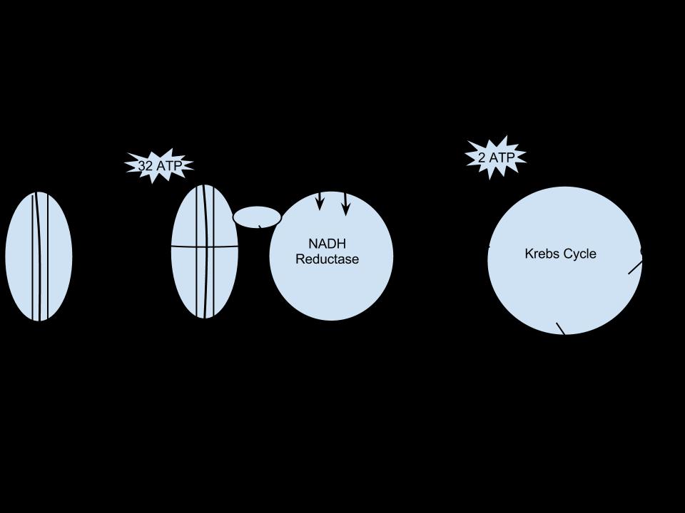 Respiration diagram