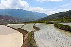Rice terraces, Sopsokha, Bhutan 01.jpg