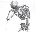 Riedel Skelett 3 Ausschnitt.PNG
