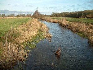 River Allen, Dorset - The river close to Furzehill