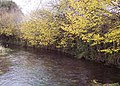 River Ebble - geograph.org.uk - 297786.jpg
