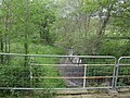 River Luggy - geograph.org.uk - 1342836.jpg