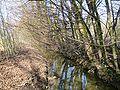 Riviere Woluwe 2006-03-18.jpeg