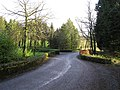 Road at Cottage Woods - geograph.org.uk - 303663.jpg