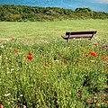 Rock-cornwall-england-tobefree-20150715-153832-2.jpg