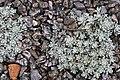 Rocks or flowers?.jpg