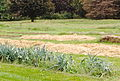 Rodale Farm Garden Mulched with Straw.JPG