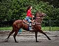 Rodeo in Panama 07.jpg