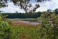 Rokyni Lutskyi Volynska-Kraievyd nature reserve-northeastern shore of the lake-1.jpg