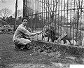 Roofdierenverzorger Frits Verbrugge gered in leeuwenkooi door collega Rudi Sitte, Bestanddeelnr 910-2773.jpg