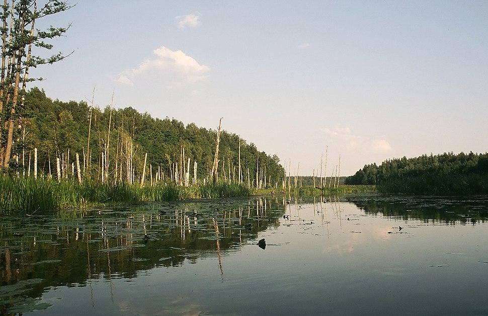 Rospuda river1