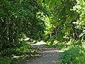 Route du Faîte (Forêt domaniale de Montmorency) - panoramio - Eric Bajart.jpg